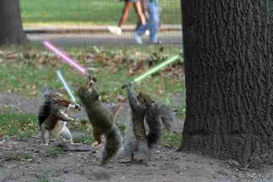 for_b3ta_jedi_squirrels.jpg
